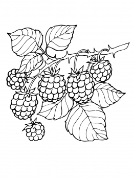 Blackberry clipart more Http://www pinterest and supercoloring Blackberry