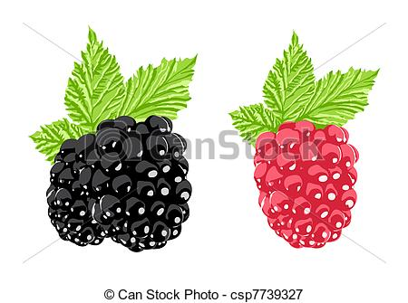 Raspberry clipart blackberry And Vector Vector Vectors of