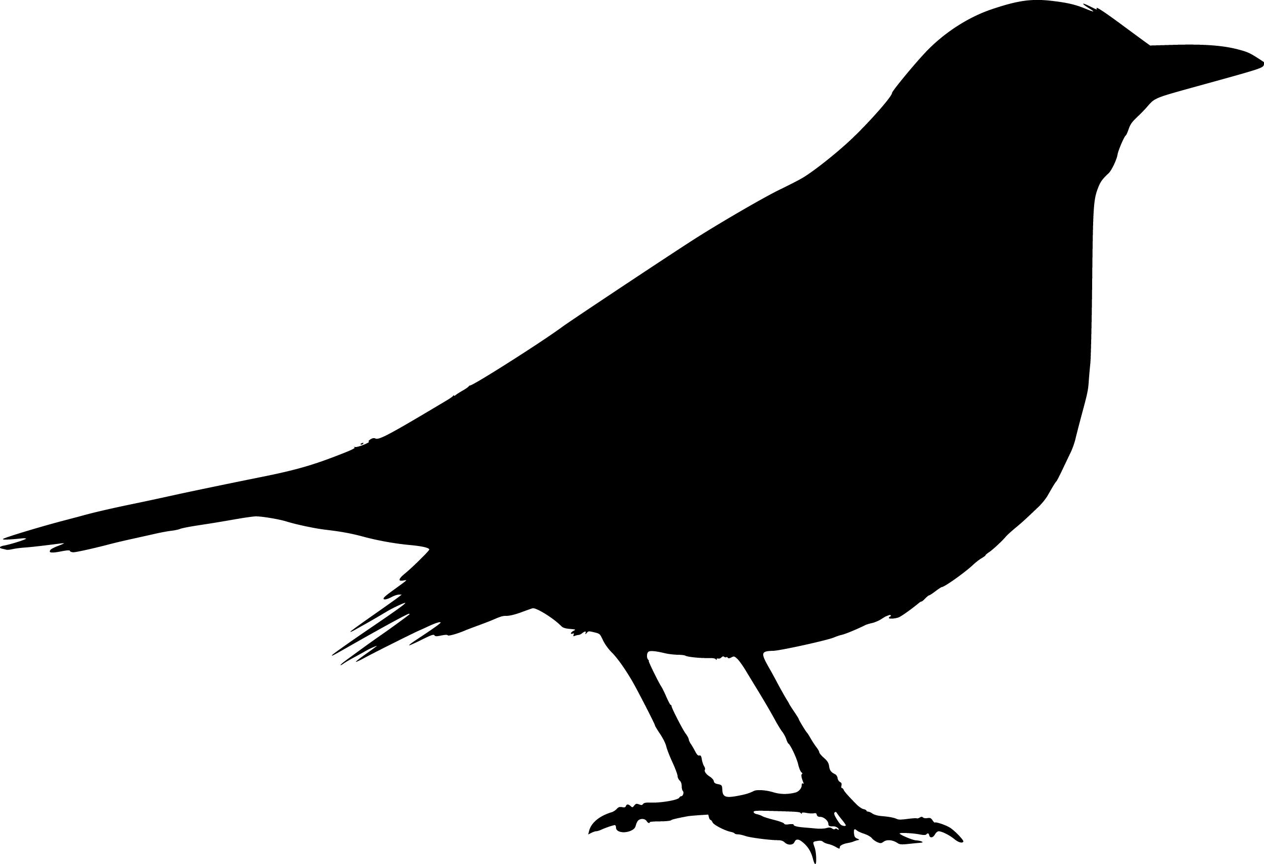 Blackbird clipart Free Free Clip Download Art