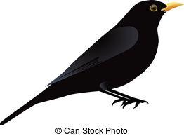 Blackbird clipart mockingbird Blackbird Stock Blackbird Blackbird