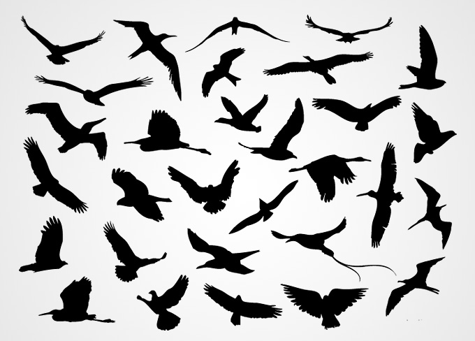 Blackbird clipart bird silhouette Search Tattoo tattoos blackbird Free
