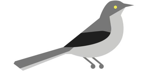 Blackbird clipart mockingbird NET NET Pulse for for