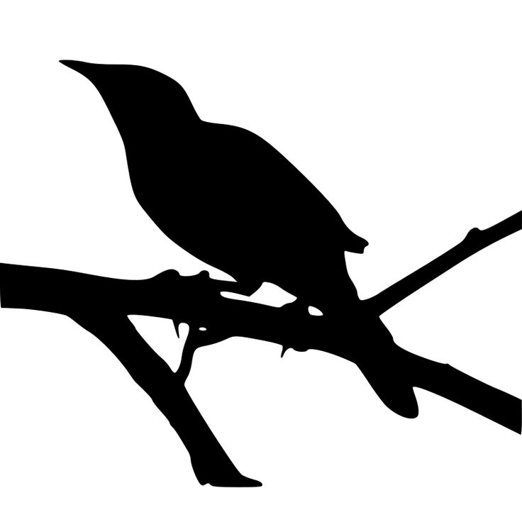 Blackbird clipart mockingbird Pin Mockingbird on Find best