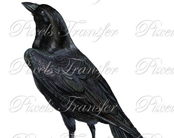 Raven clipart primitive #5