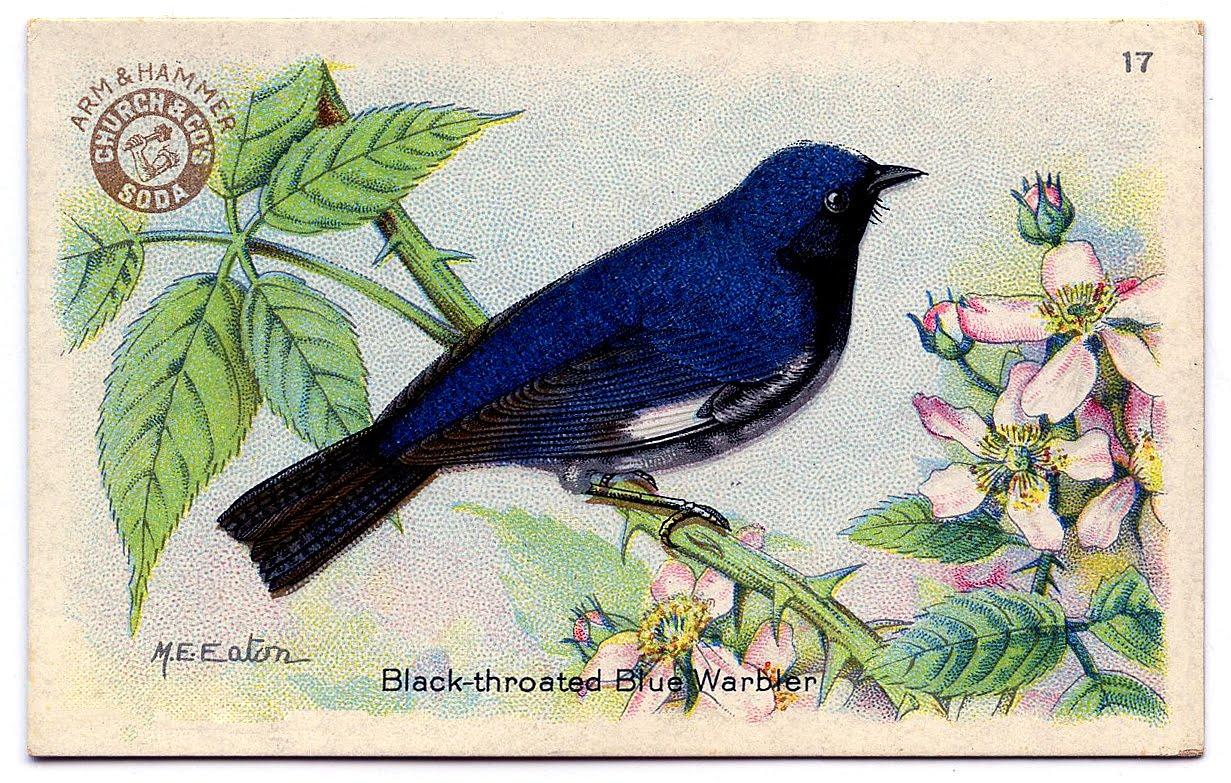 Bluebird clipart vintage Bright Art Vintage Clip Charming