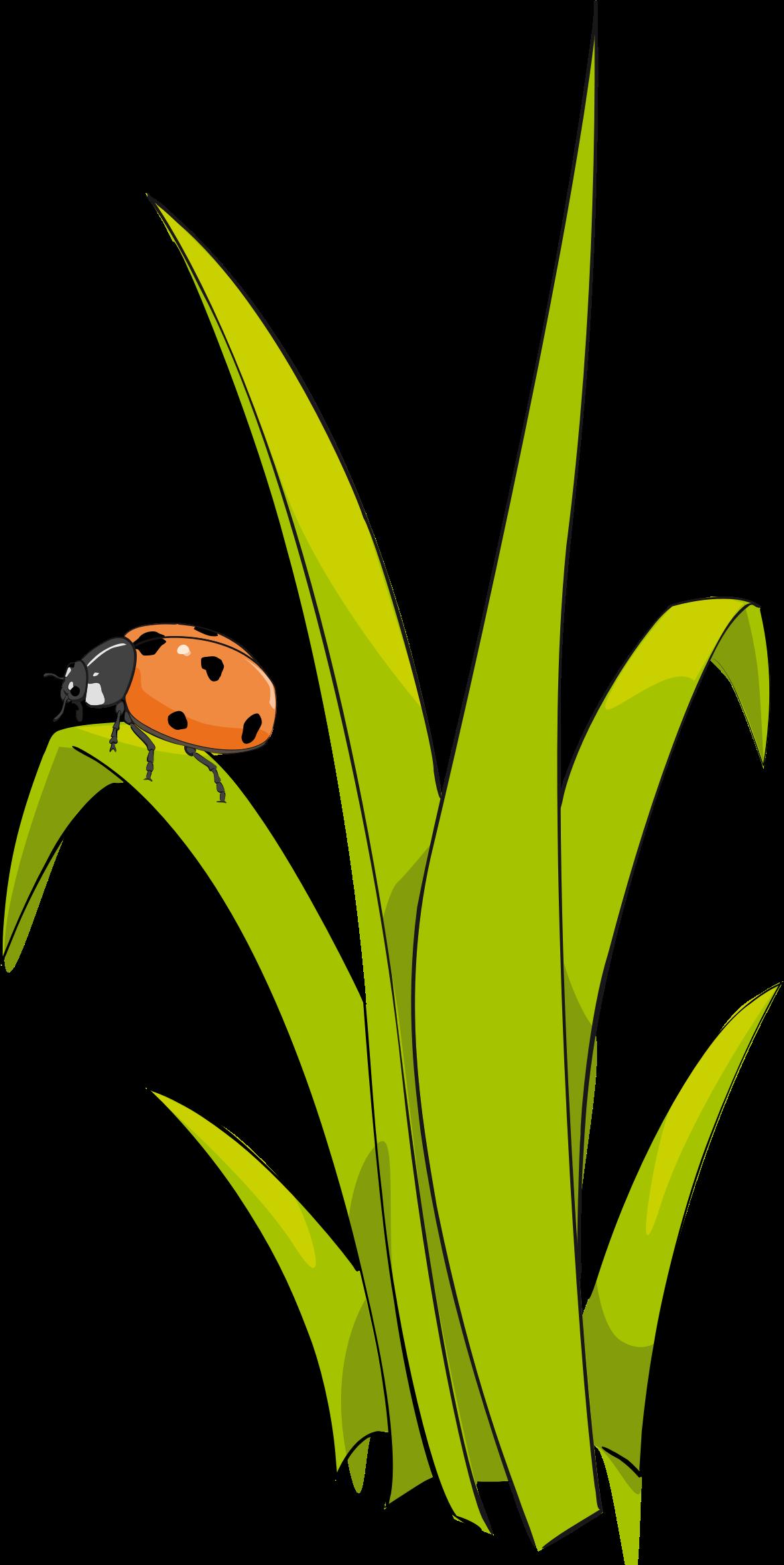 Blade clipart grass D herbe sur herbe Ladybird