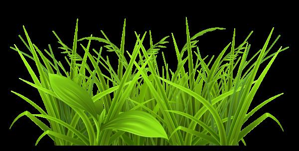 Blade clipart grass tree травы Деревья Декоративные PNG Clipart