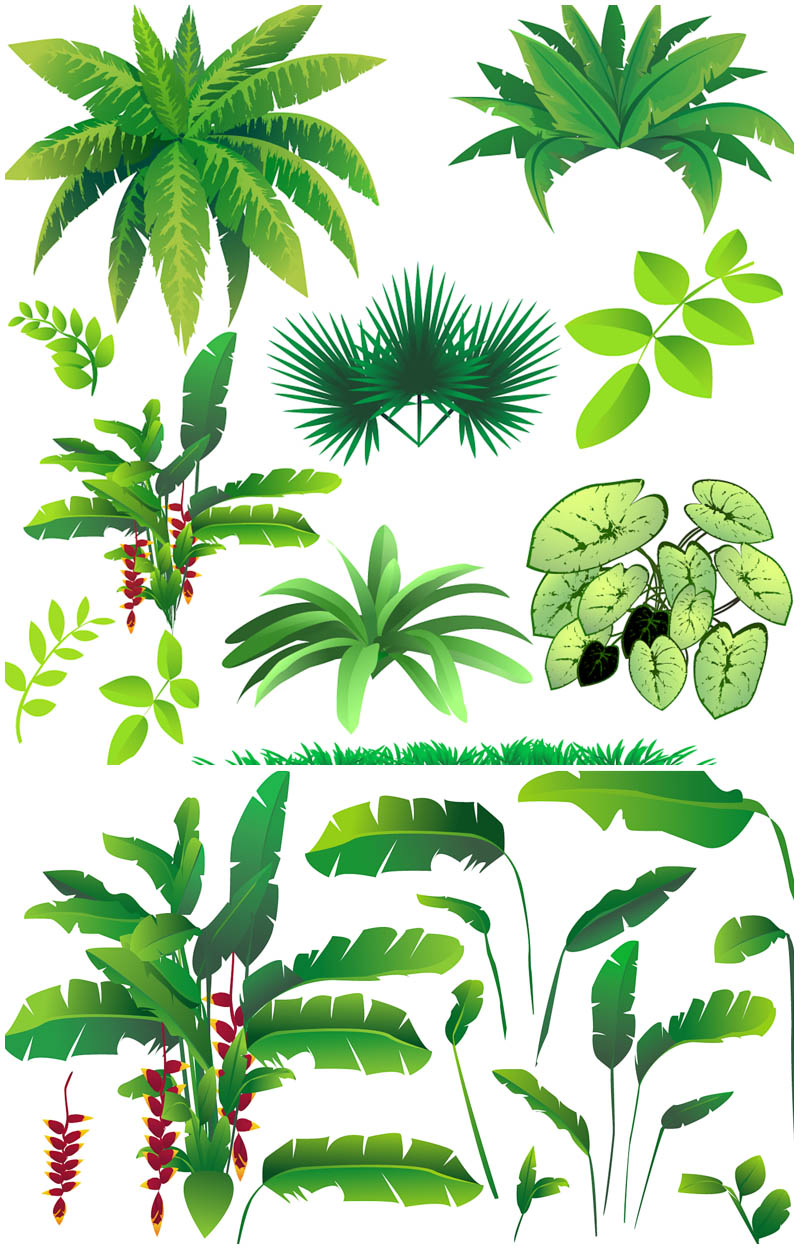 Savannah clipart rainforest tree #14