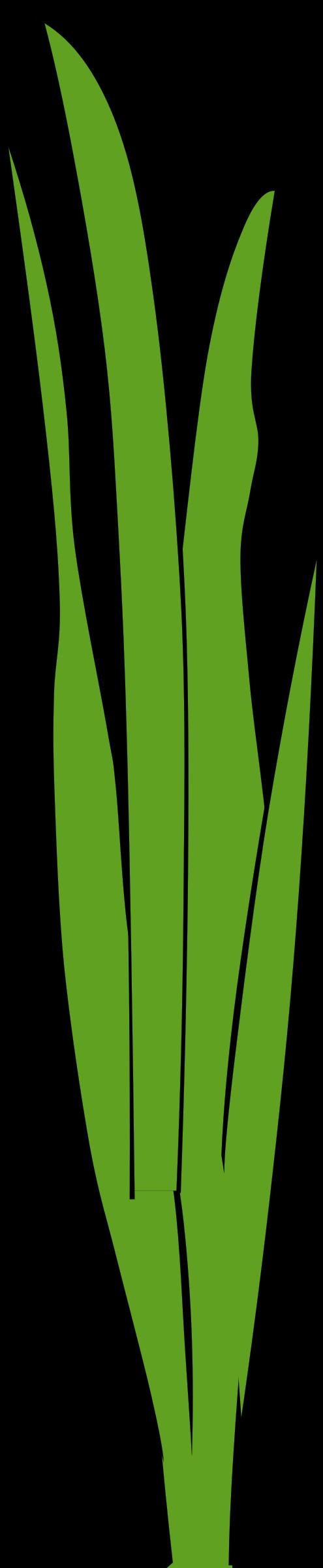 Blade clipart seagrass Blades Clipart sea plants art
