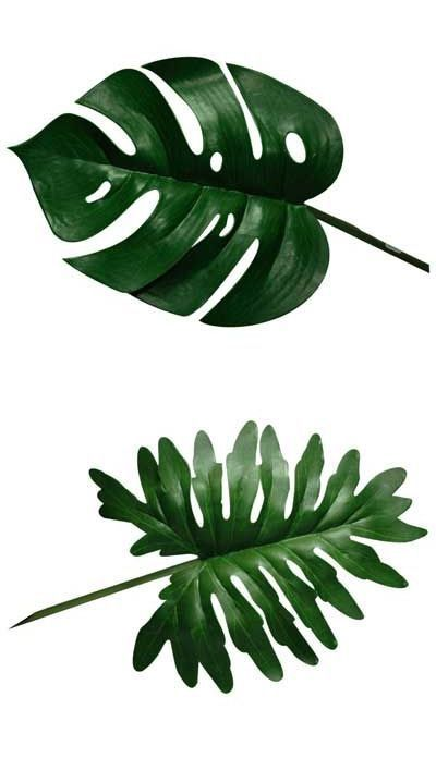 Blade clipart tropical leave On leaves The ideas Pinterest