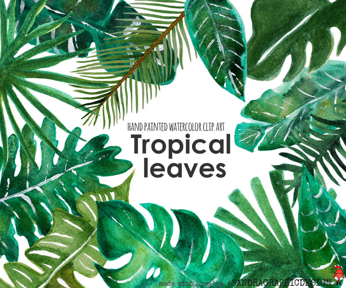 Leaves clipart tropical leaf #10