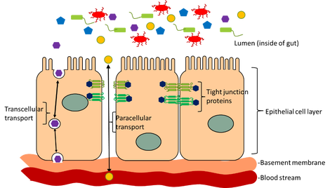 Blood clipart gut Leaky brain cells is semi