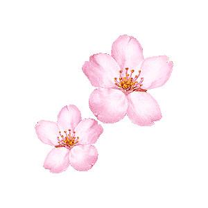 Ume Blossom clipart Drawings Blossom Blossom clipart #15