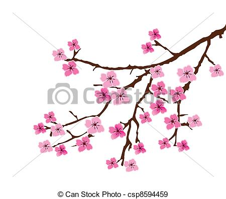 Drawn sakura blossom white background Vector branch cherry blossom Stock
