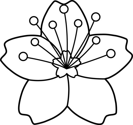 Blossom clipart black and white White Black Cherry White Cherry