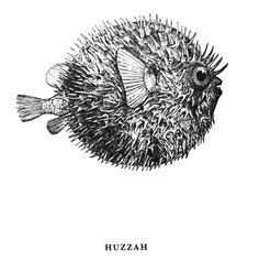 Blowfish clipart large fish Drawing Fish  pufferfish/blowfish blowfish
