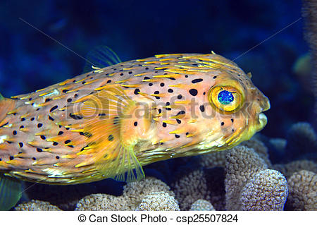 Blowfish clipart sea creature  Normal non Photo Stock