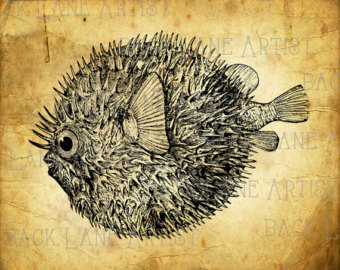 Blowfish clipart sea creature Etsy Blowfish Illustration Art Clipart