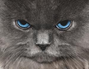 Blue clipart cat eye Eye Himalayan Clip Art Blue