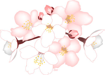 Blue clipart cherry blossom Clip Cherry Flower Art Clip