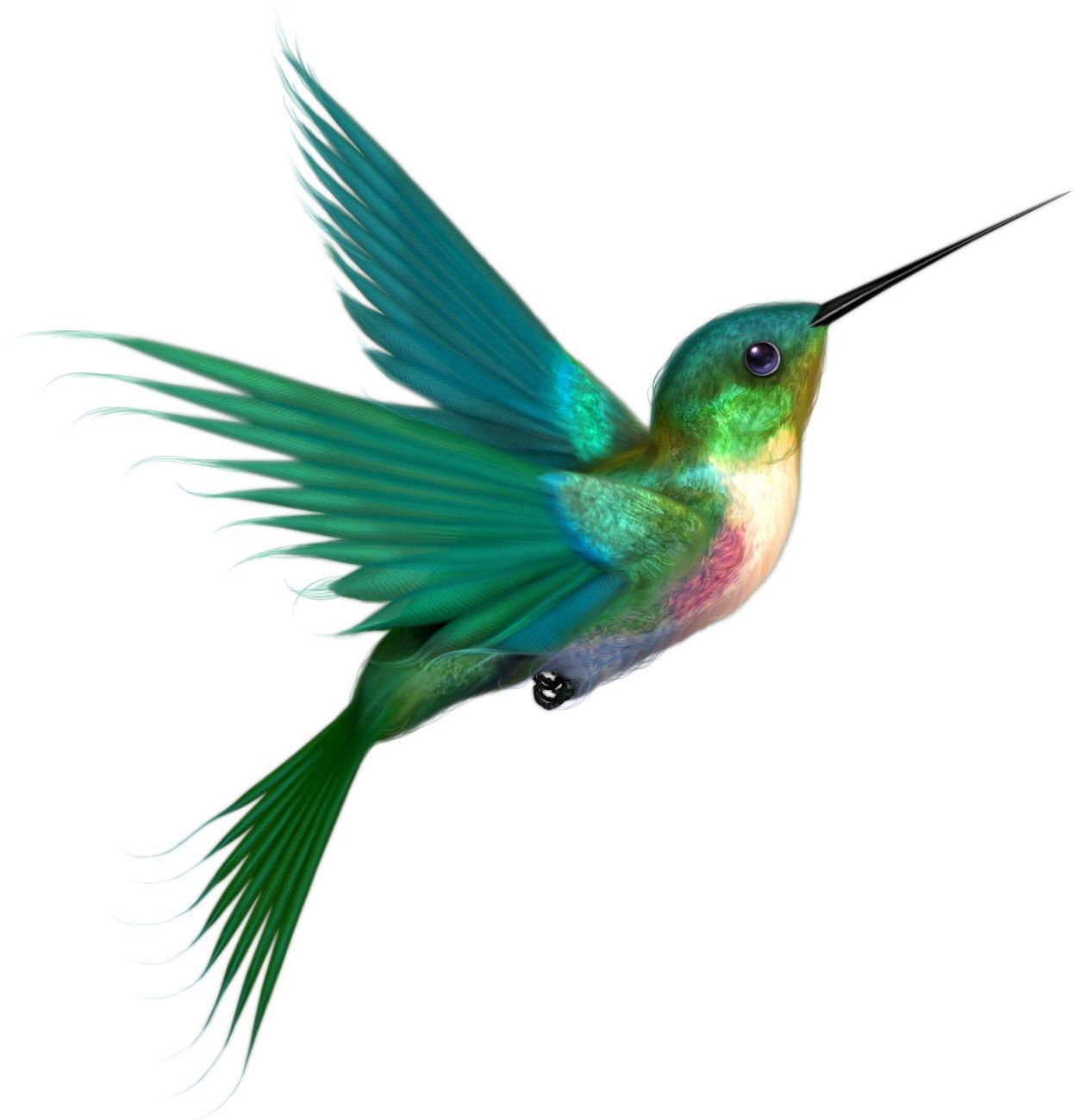 Blue clipart hummingbird ClipartMe Hummingbird Hummingbird Clipart Free