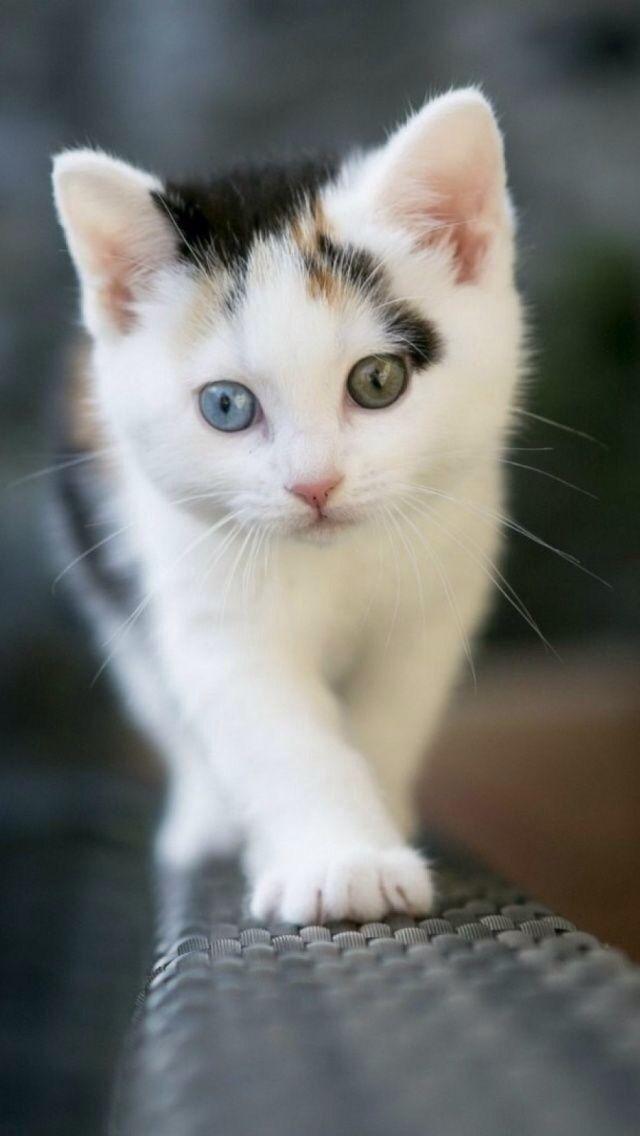 Blue Eyes clipart eye ear 20+ eyes cats A all)
