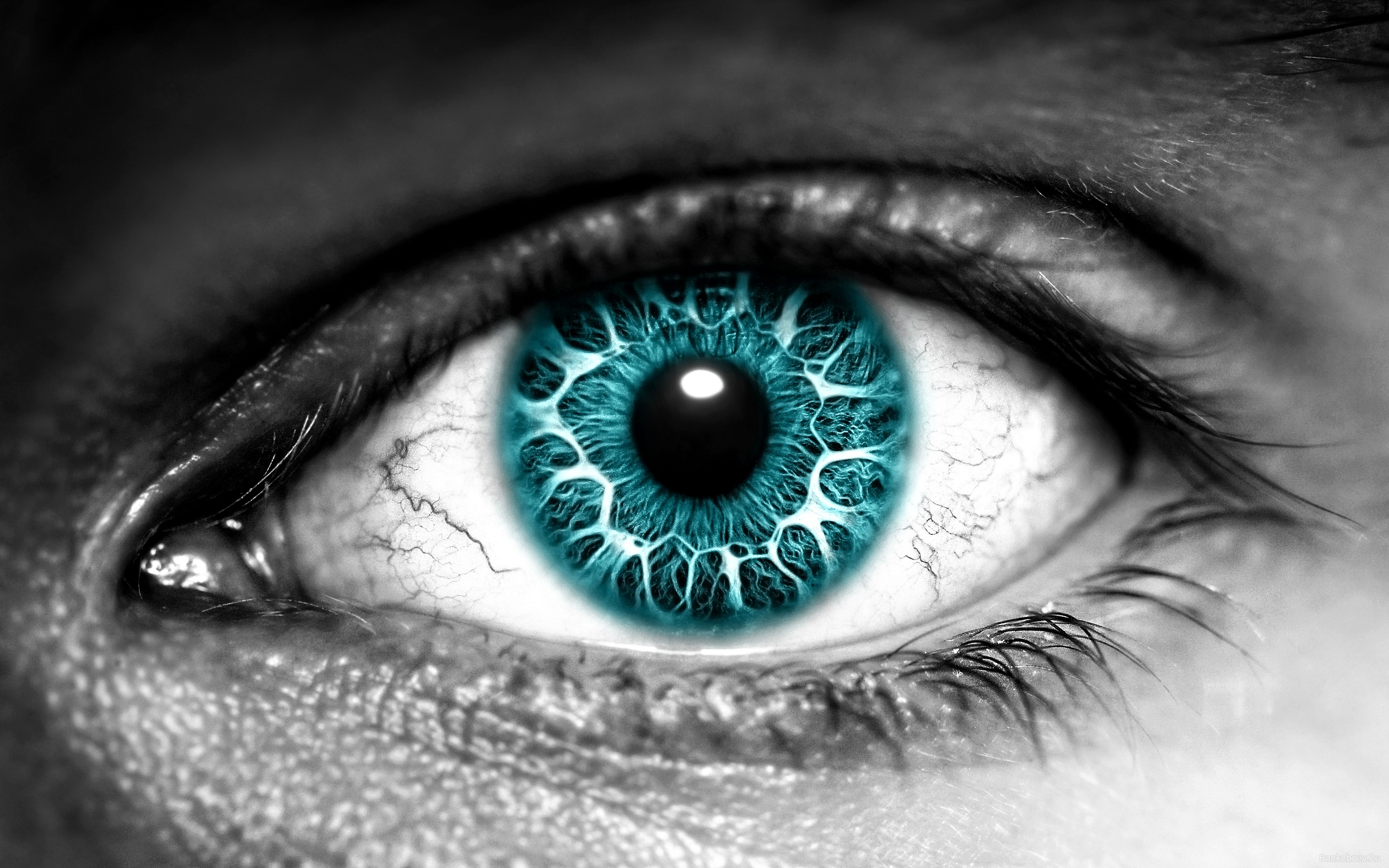 Blue Eyes clipart iris eye Download a you Free Library