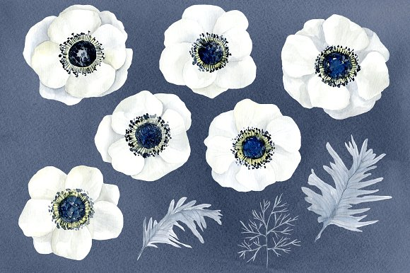 Blue Flower clipart anemone flower Anemone white on Creative flowers
