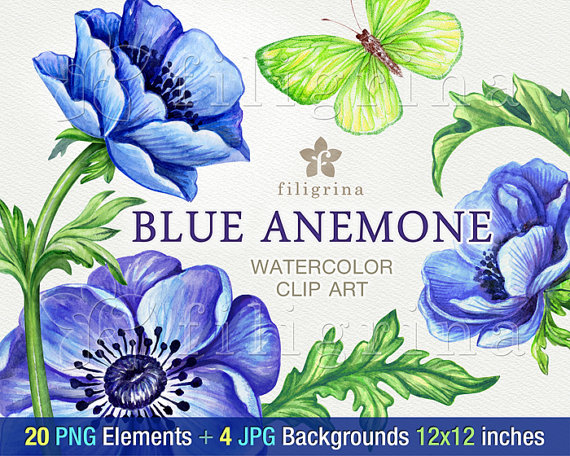 Blue Flower clipart anemone flower Green digital Anemone  to