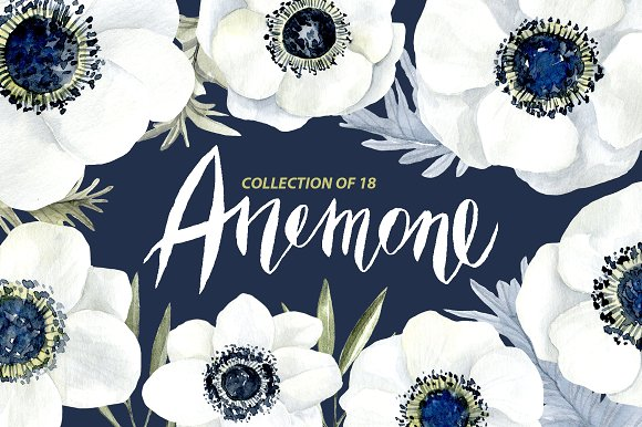 Blue Flower clipart anemone flower Market white flowers Illustrations white