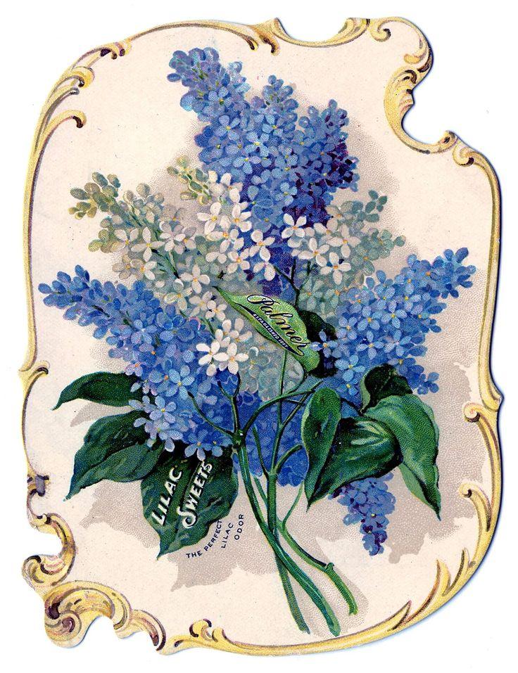 Blue Flower clipart book VICTORIAN on Find SCRAP SCRAP