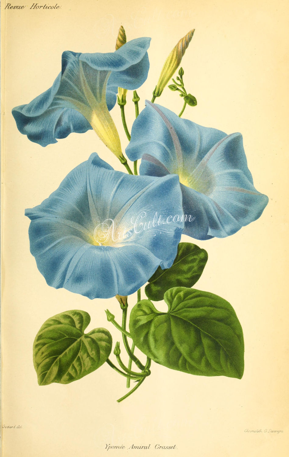 Blue Flower clipart book  flowers This ipomoea is