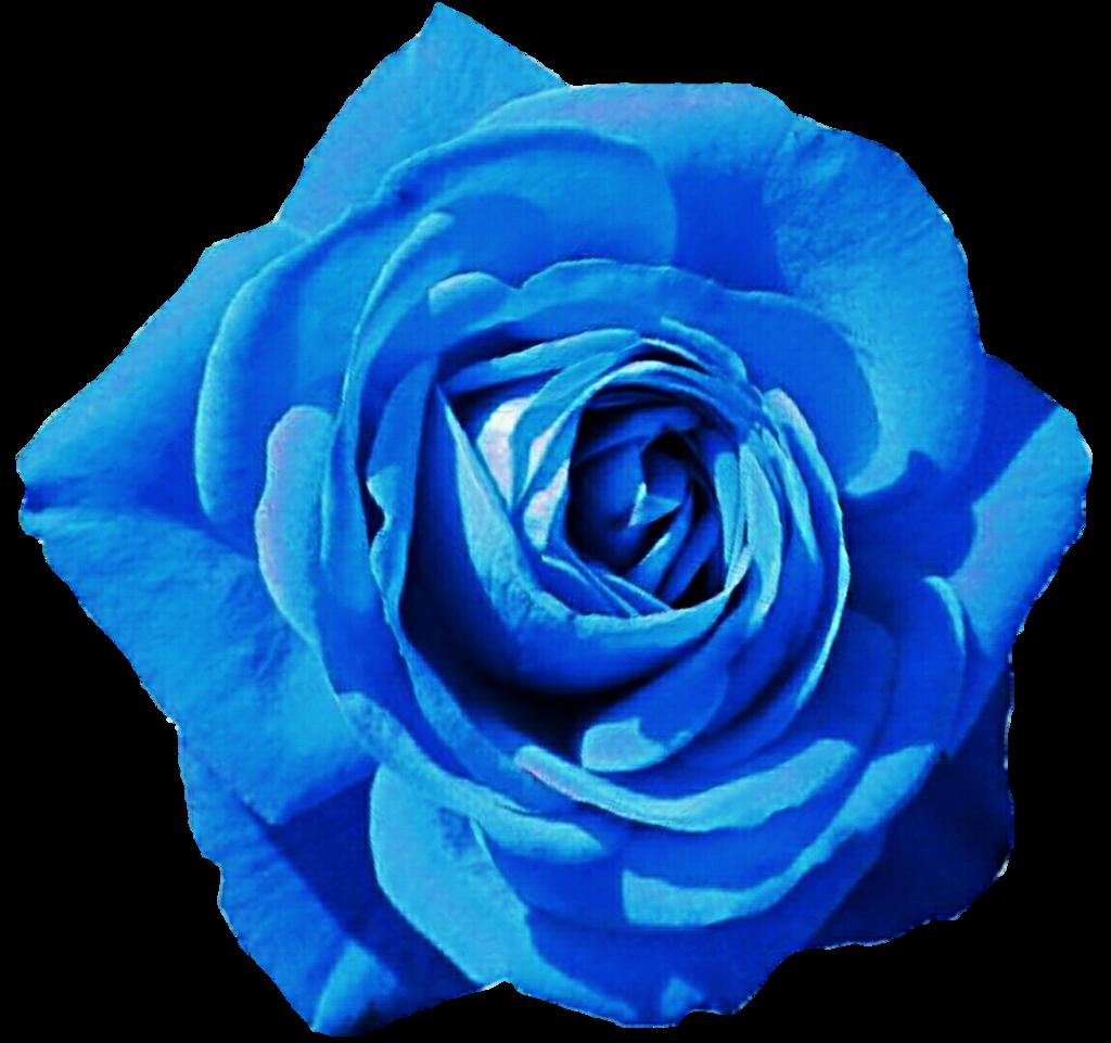 Blue Flower clipart skyblue Blue Rose jeanicebartzen27 jeanicebartzen27 by
