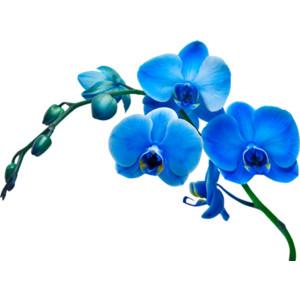 Blue Flower clipart vase Flowers/ / Arana Polyvore Flipkens