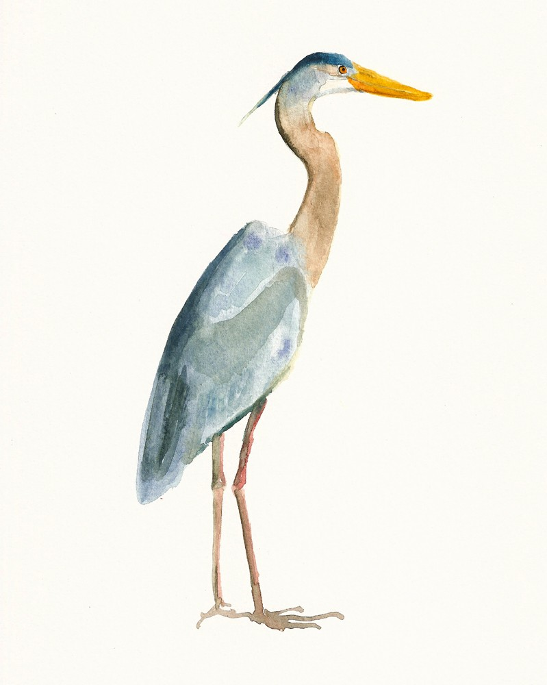 Blue Heron clipart Watercolor HERON heron 8x10inch blue
