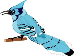 Jay clipart Art Blue Jay Clip Jay