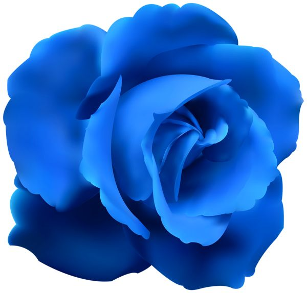 Blue Rose clipart ribbon Pinterest and on 1561 Blue