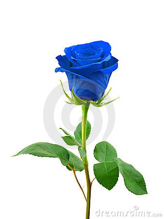 Blue Rose clipart valentine rose Blue roses clipart and blue
