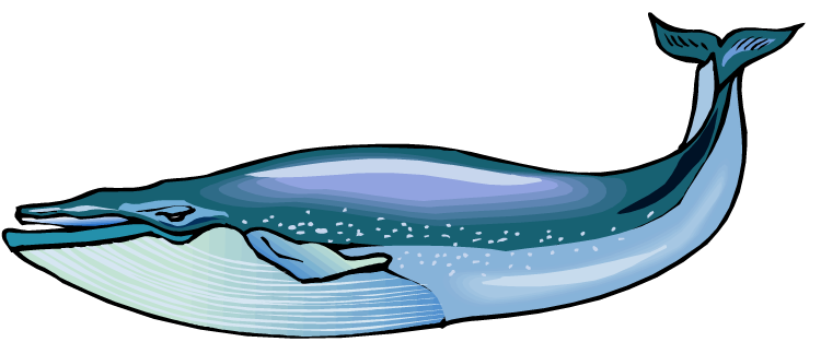 Blue Whale clipart whale watching Blue Clipartix whale clipart whale