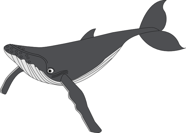 Blue Whale clipart gray whale Com clip Whale as: this