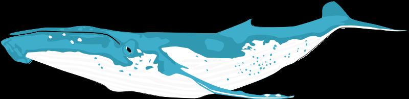 Humpback Whale clipart cute Clip Art 2 Page Public