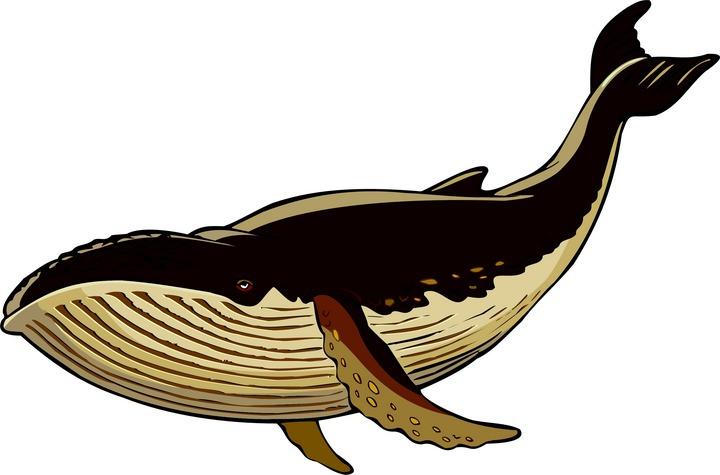 Blue Whale clipart whale tale Whale Cliparting art clipart art