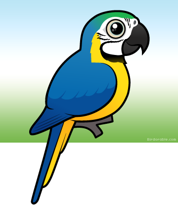 Blue-and-yellow Macaw clipart Blue Birdorable by Meet Cute