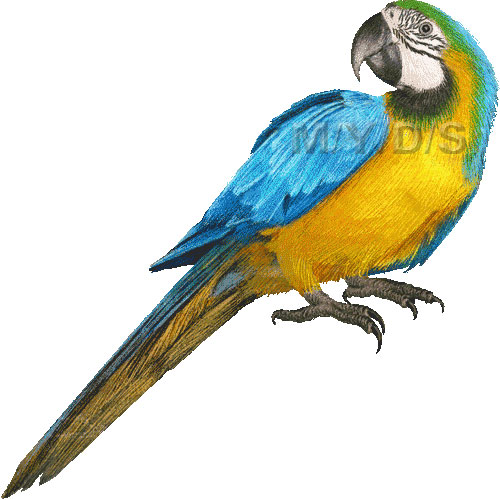 Blue-and-yellow Macaw clipart #4