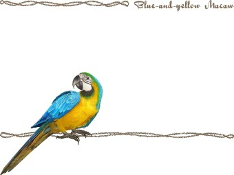 Blue-and-yellow Macaw clipart Blue Blue Blue postcard and