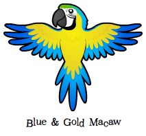 Blue-and-yellow Macaw clipart animated #15
