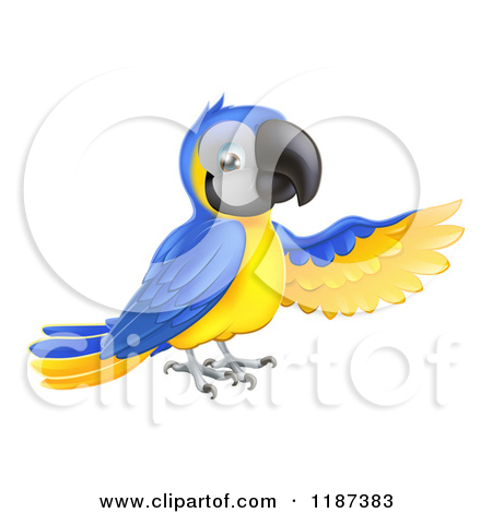 Blue-and-yellow Macaw clipart animated #13
