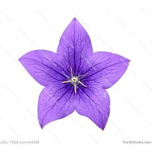 Bluebell clipart Flower Image Stock Clipart Bluebell