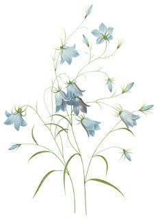 Bluebell clipart Pinterest Bluebell on about 27