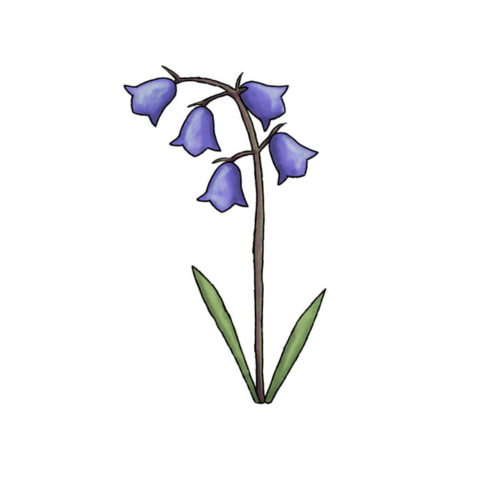 Bluebell clipart Cliparts Cliparts Illustrations Zone Bell
